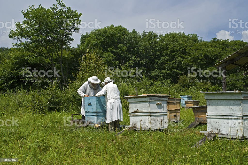 Beekeepers on apiary royalty-free stock photo