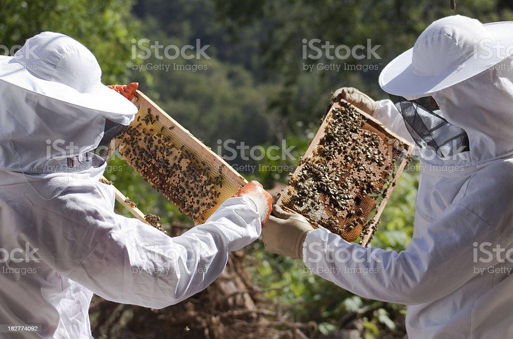 Beekeepers stock photo