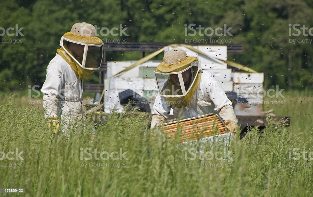 Beekeepers with frames stock photo