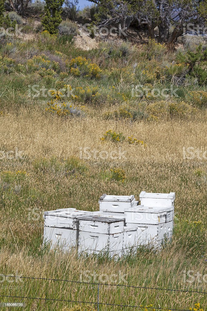 Beekeeping boxes royalty-free stock photo