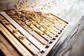 Beekeeping in Berlin