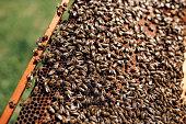 Beekeeping job