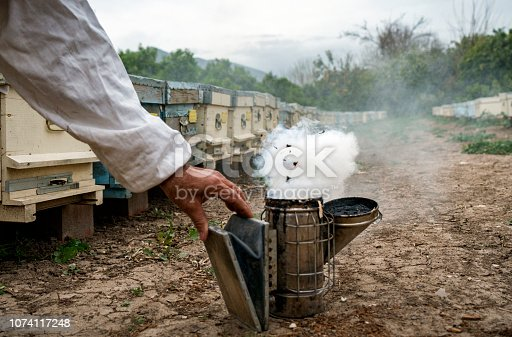 Beekeeper wearing a veil using a smoker for calming bees on the farm, Mugla, Turkey