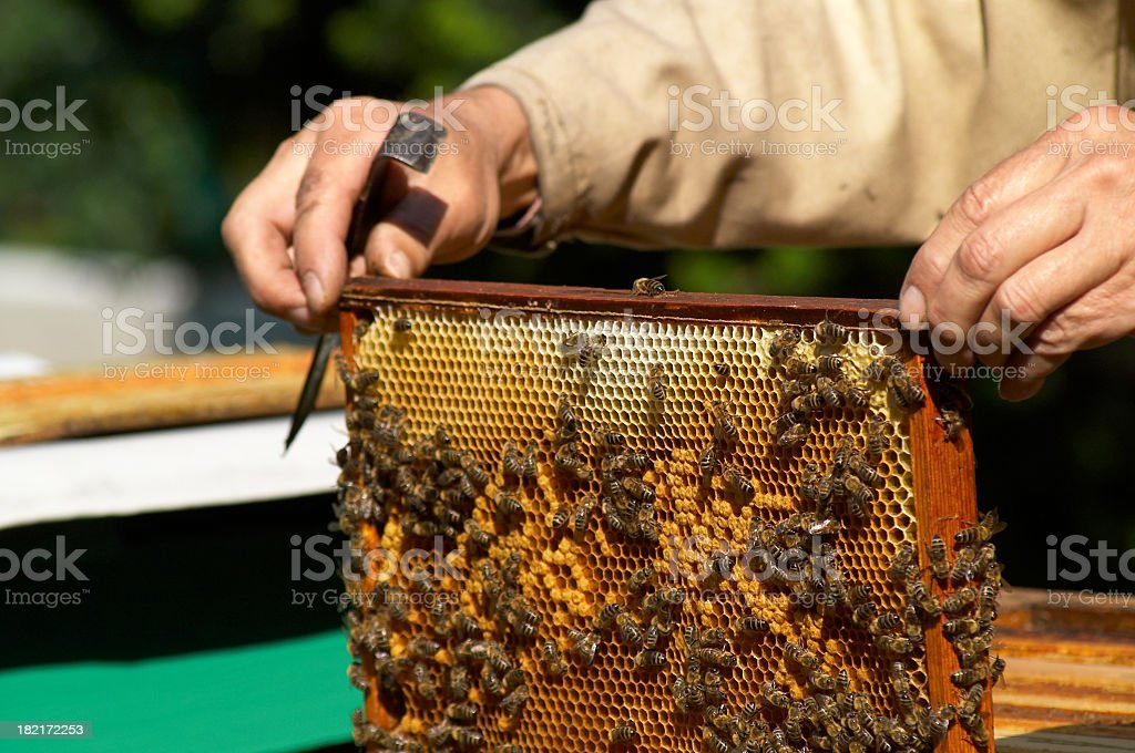 Beekeeping royalty-free stock photo