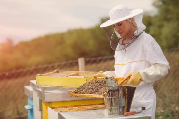 die bienenzucht - bienenstock stock-fotos und bilder
