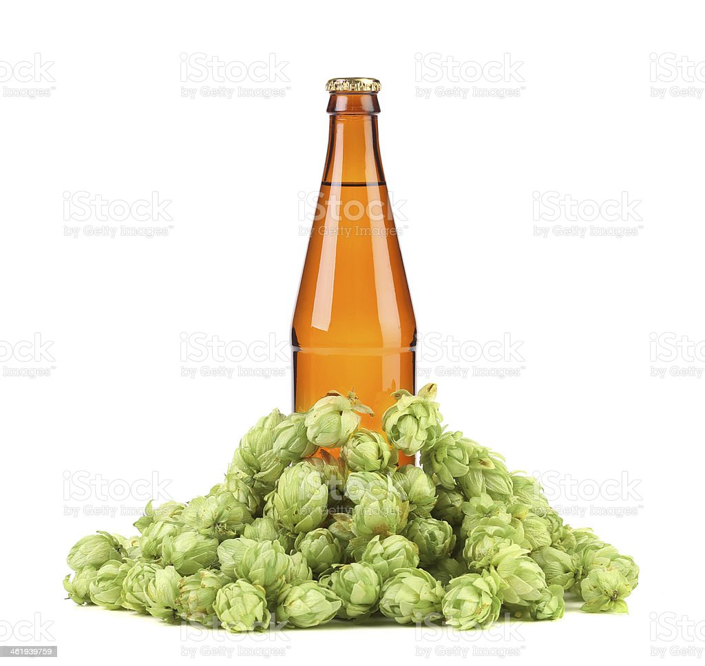 Beer botlle and green hop. stock photo