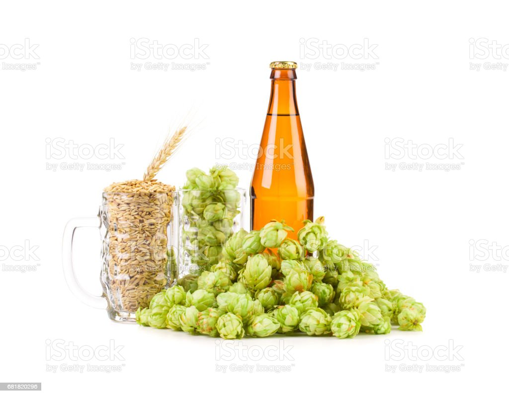 Beer bottle and glasses full of grains and hops. stock photo