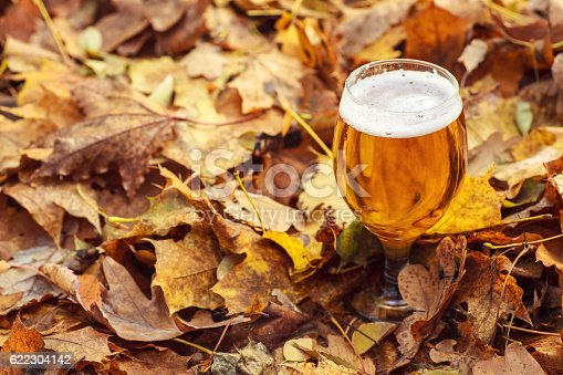 istock Beer in autumn forest 622304142