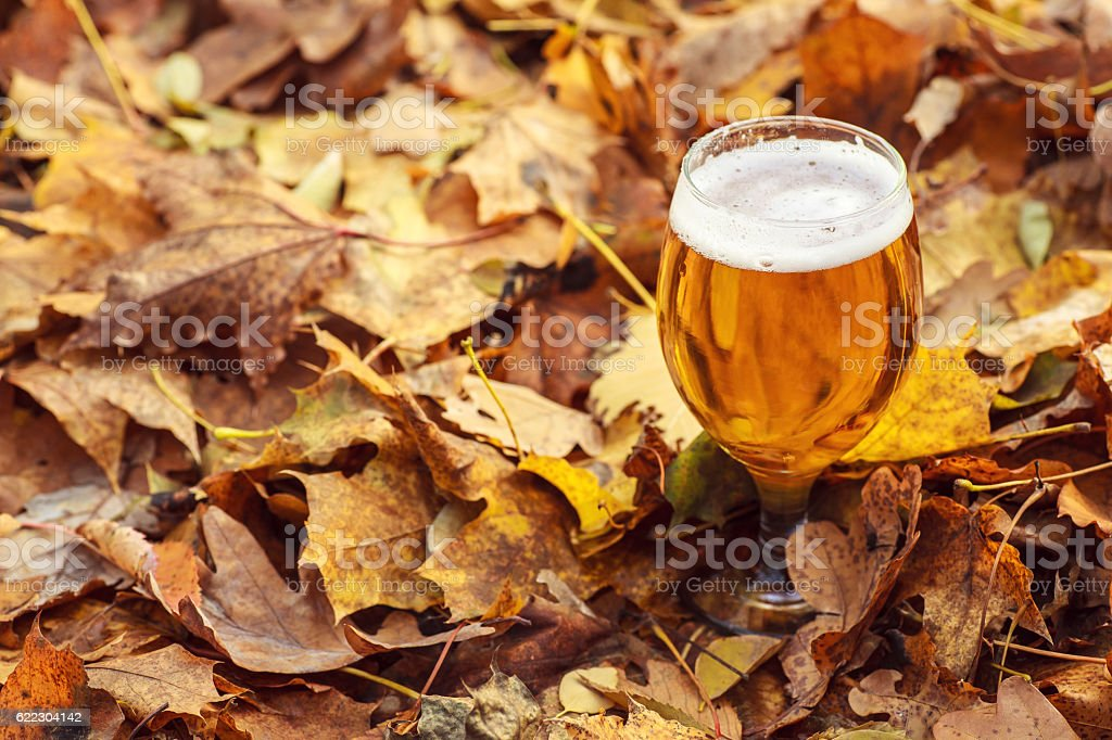 Beer in autumn forest stock photo