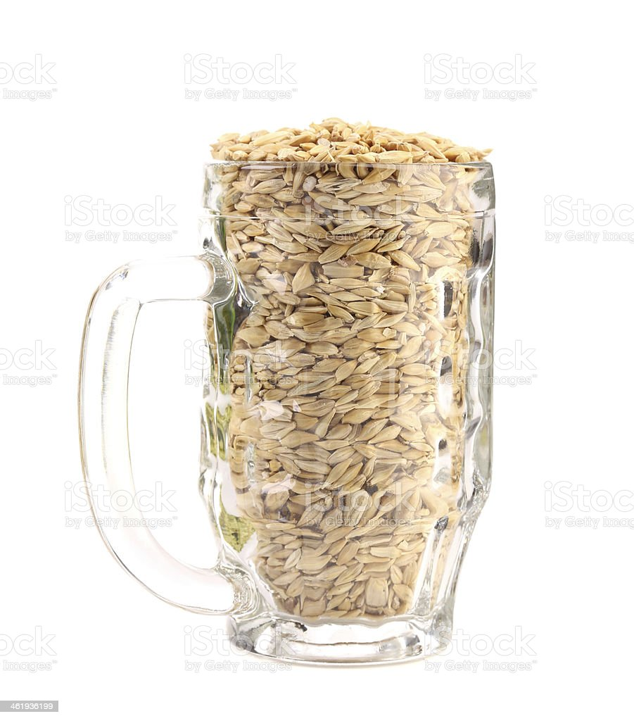 Beer mug with barley. royalty-free stock photo