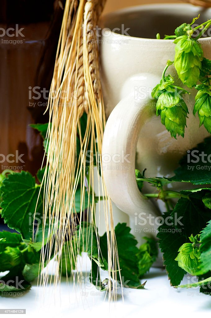 Beer with Barley and Hops royalty-free stock photo