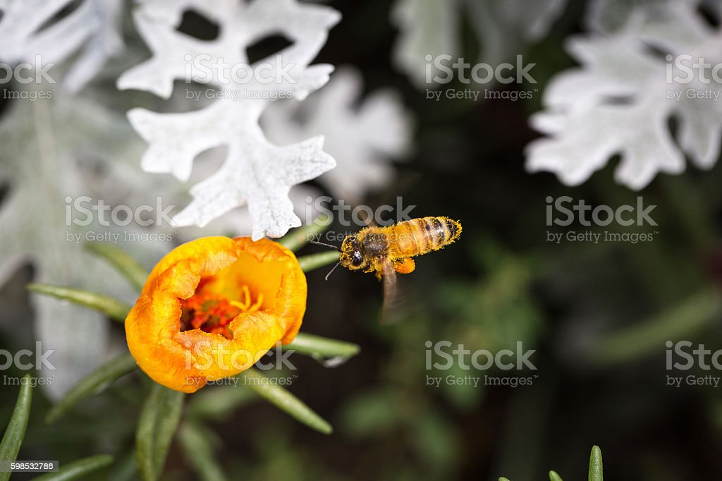 Abeilles et fleurs  photo libre de droits