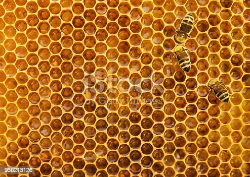istock Bees at the honeycomb 936213126