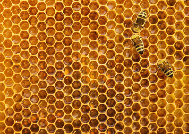 Bees at the honeycomb stock photo