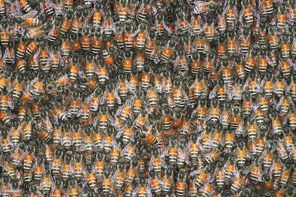 bees background royalty-free stock photo