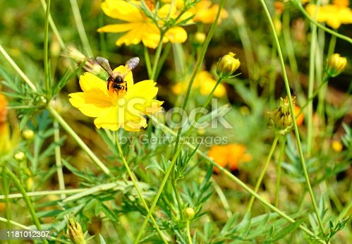Thailand, Backgrounds, Beauty In Nature, Bee, Botany