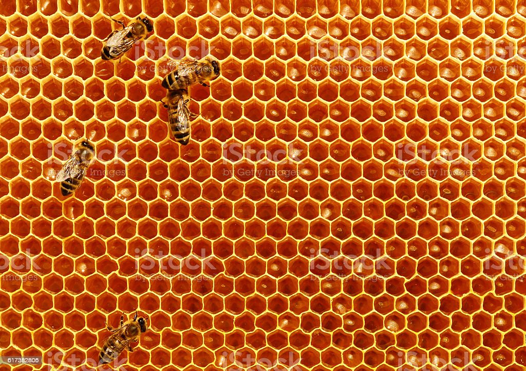 Bees convert nectar into honey and cover it in honeycombs stock photo