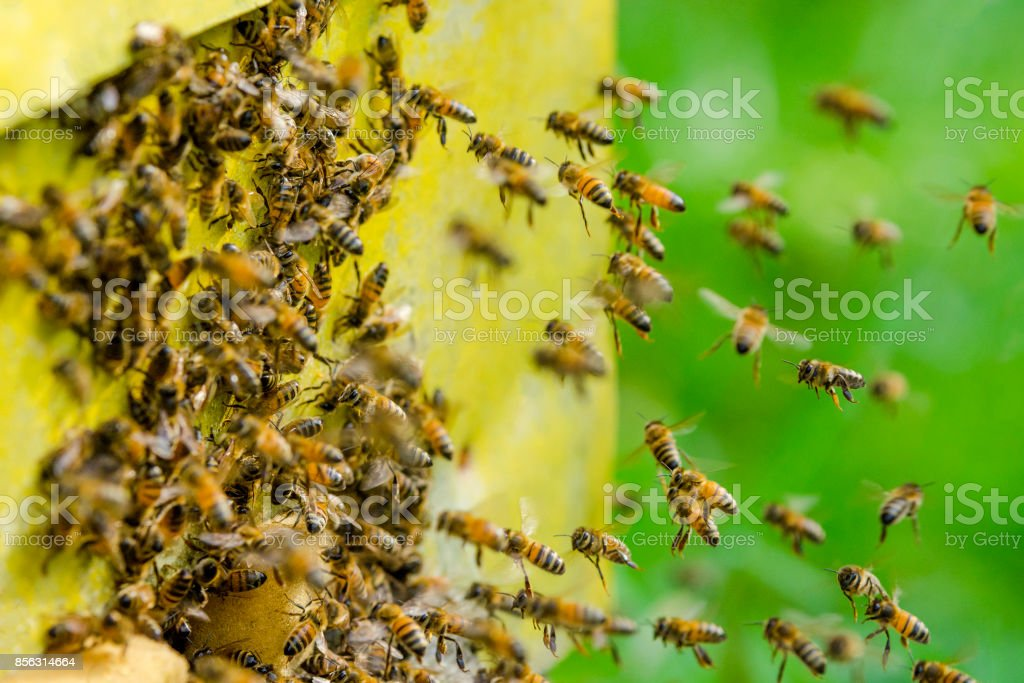 Bees entering a beehive stock photo