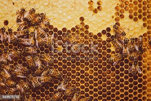 istock Bees feeding cells with honey honeycomb 543973710
