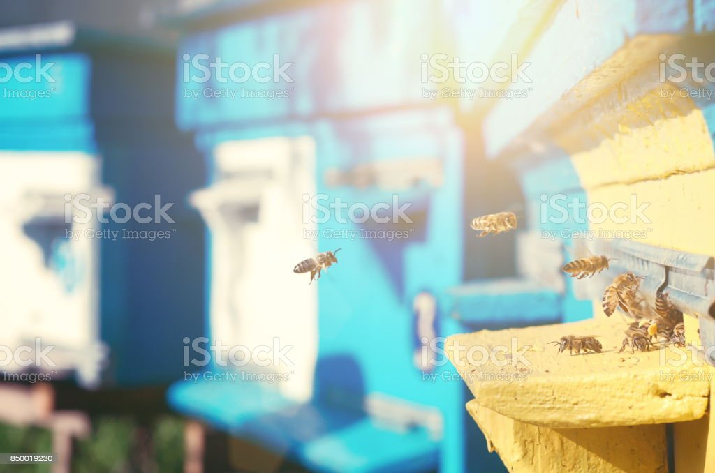 Bees fly near the hive. stock photo