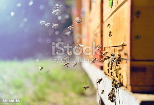 istock Bees flying around beehive. Beekeeping concept. 880139186