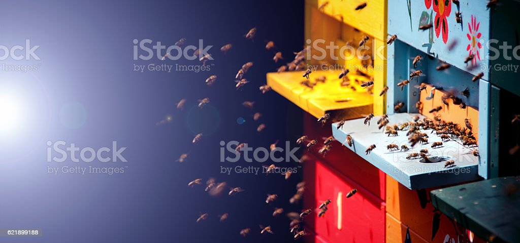 Bees going home stock photo