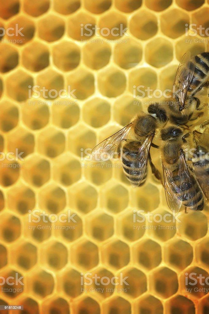 Bees & Honeycomb royalty-free stock photo