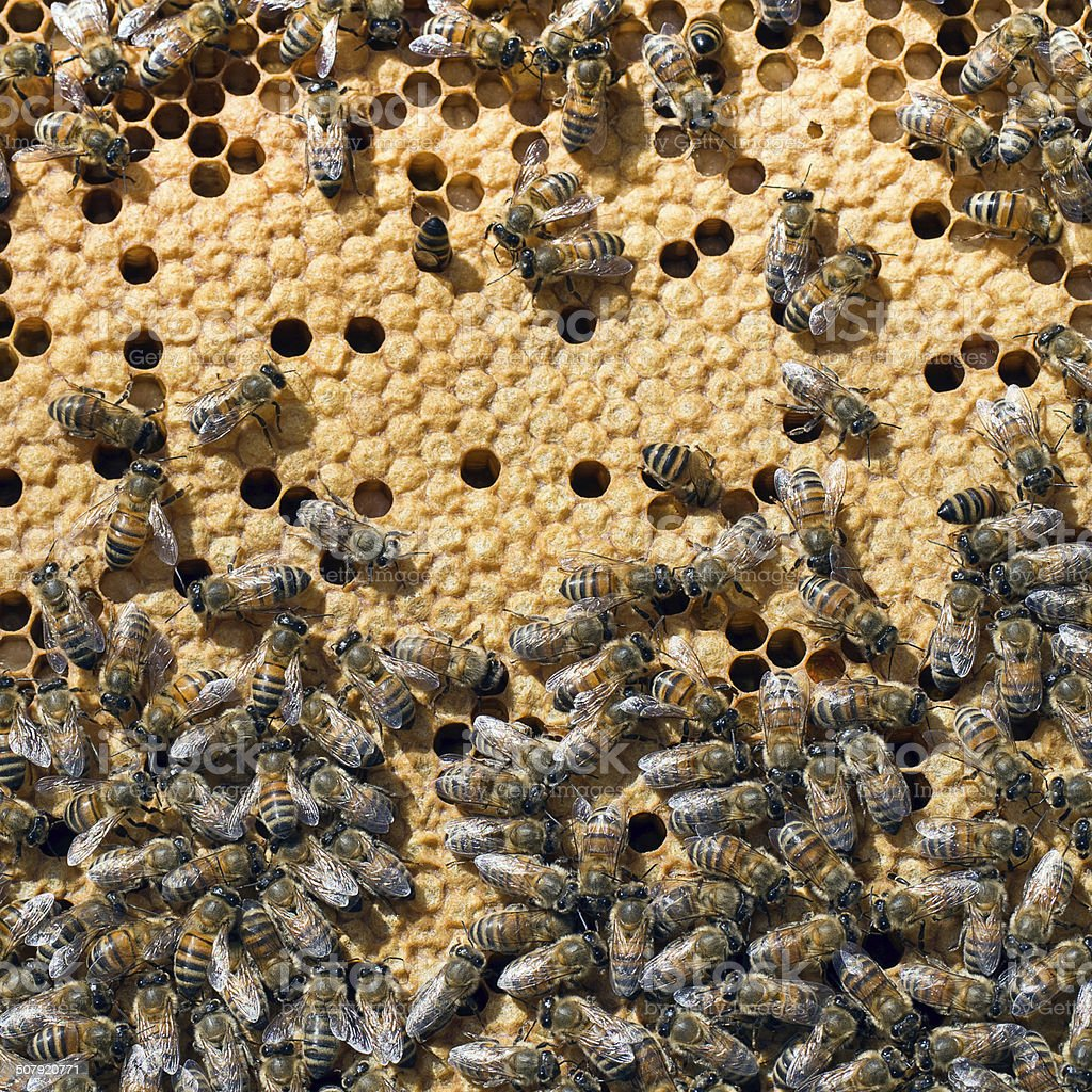 Bees in bee hive closeup. Sealed cell for young brood. stock photo