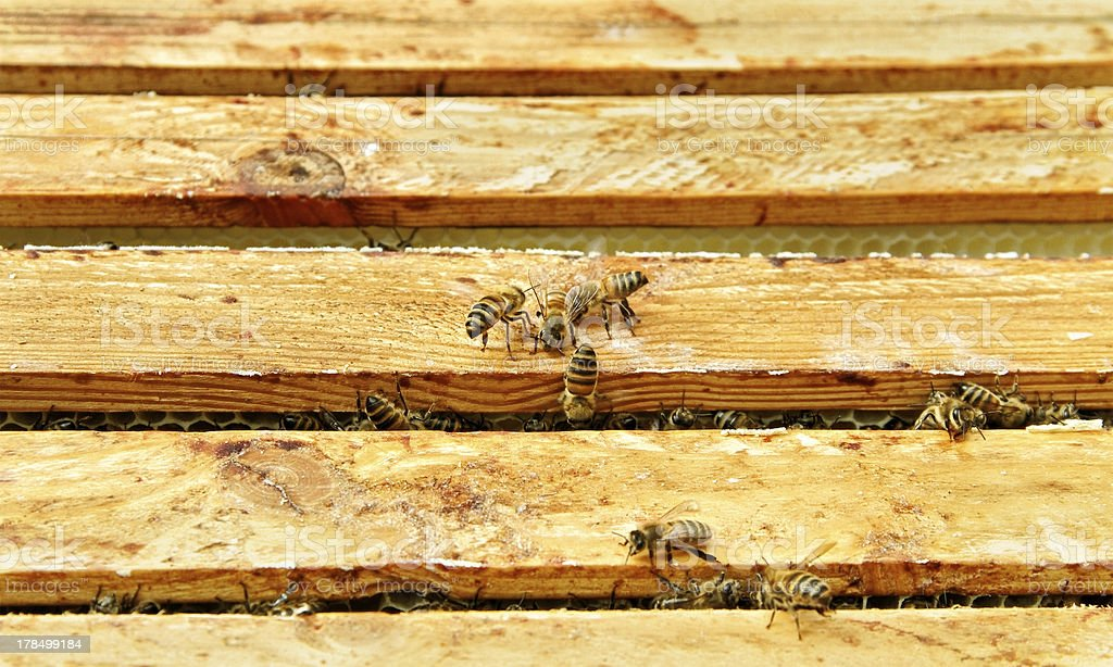 Bees in beehive. royalty-free stock photo
