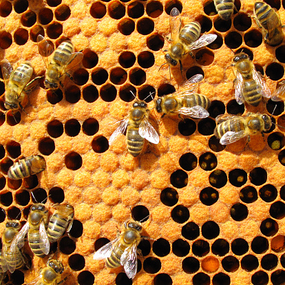 Bees In Beehive Stock Photo - Download Image Now