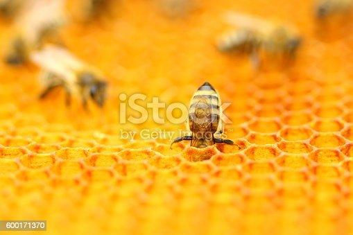istock Bees in honeycomb 600171370