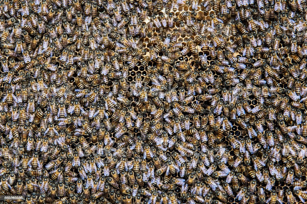Bees in the honeycomb 免版稅 stock photo