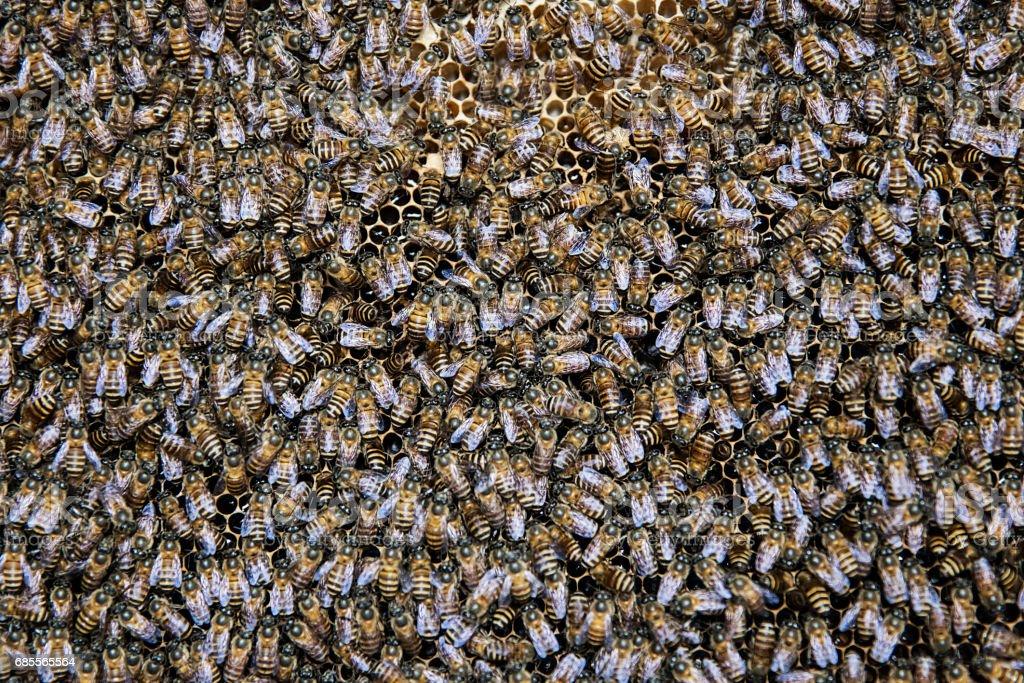 蜜蜂在蜂巢 免版稅 stock photo