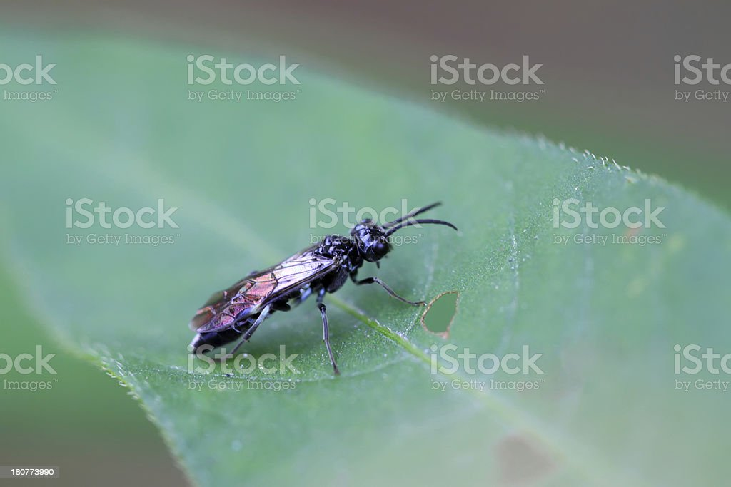 bees insects royalty-free stock photo