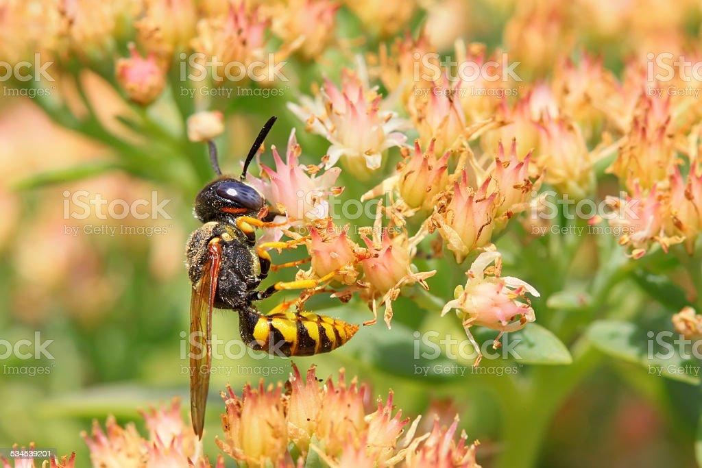 bees tipo de insectos - foto de stock