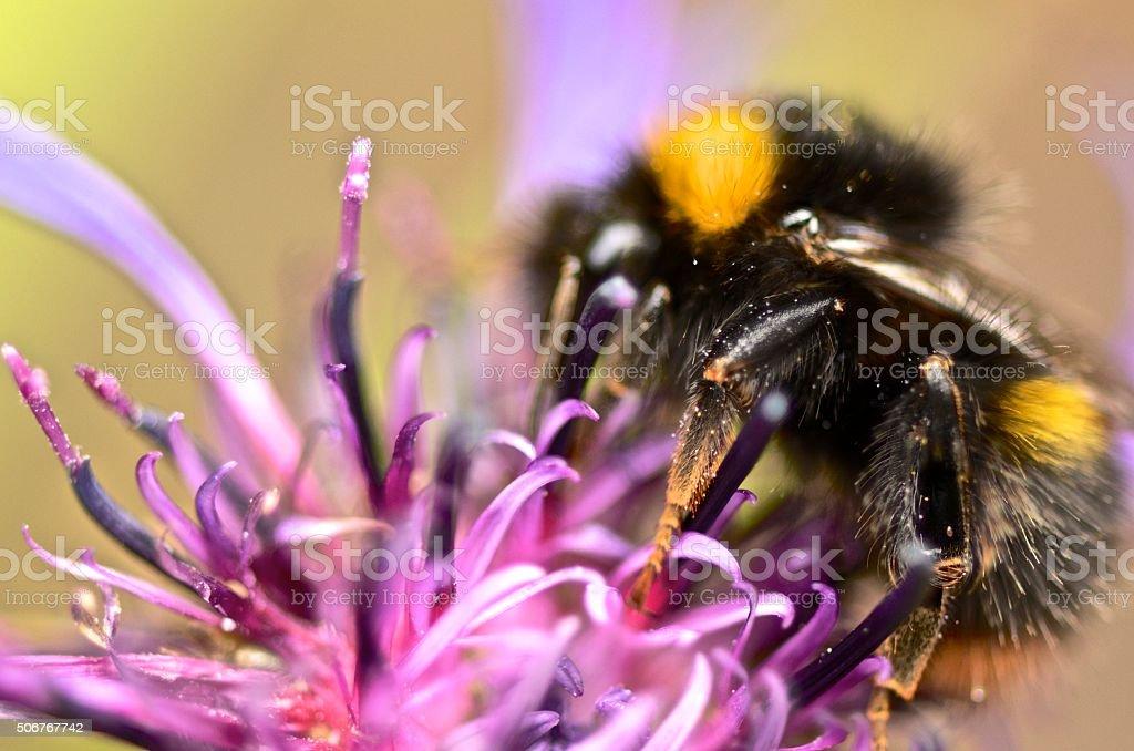 Bee's Knees stock photo