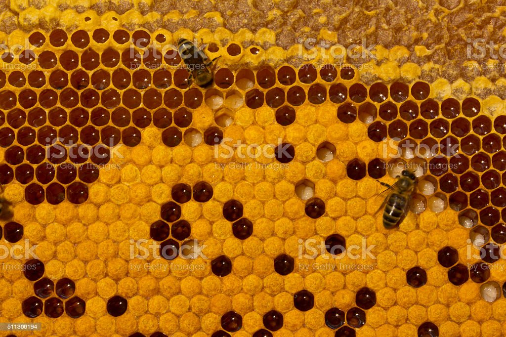 Bees, larvae and cocoons. stock photo