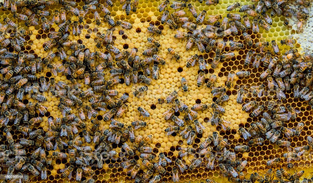 Bees Making Honeycomb stock photo