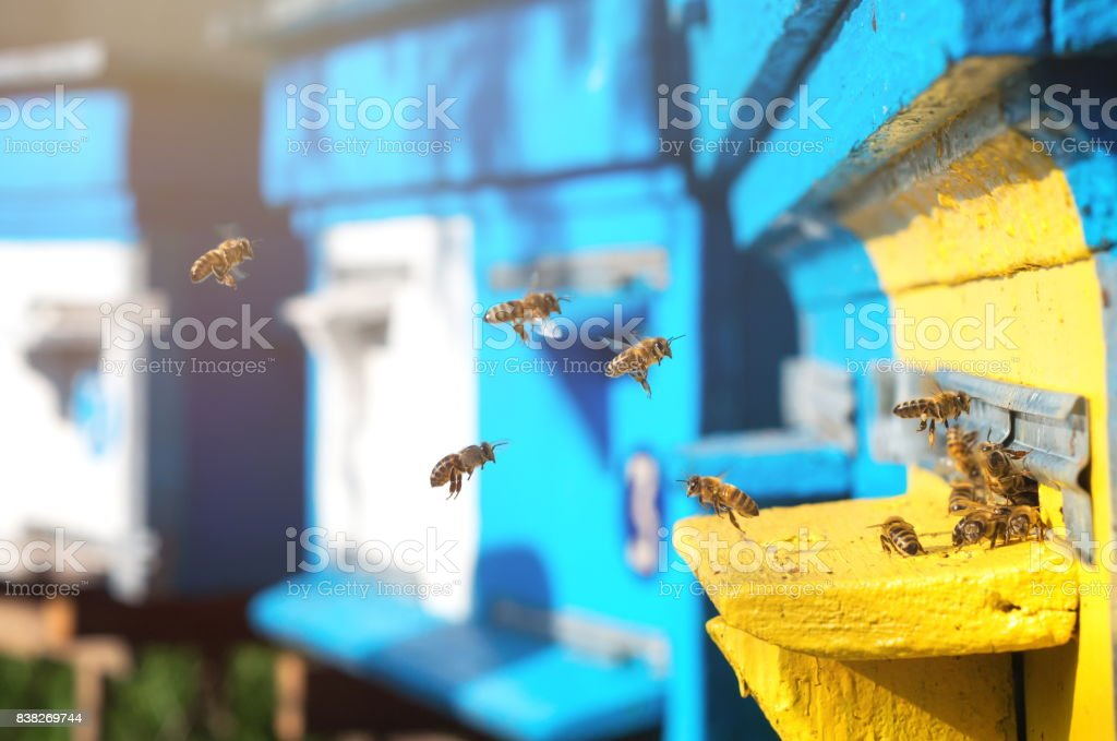 Bees near the hive stock photo