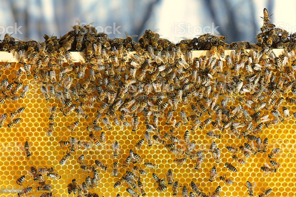 Bees on beehive stock photo