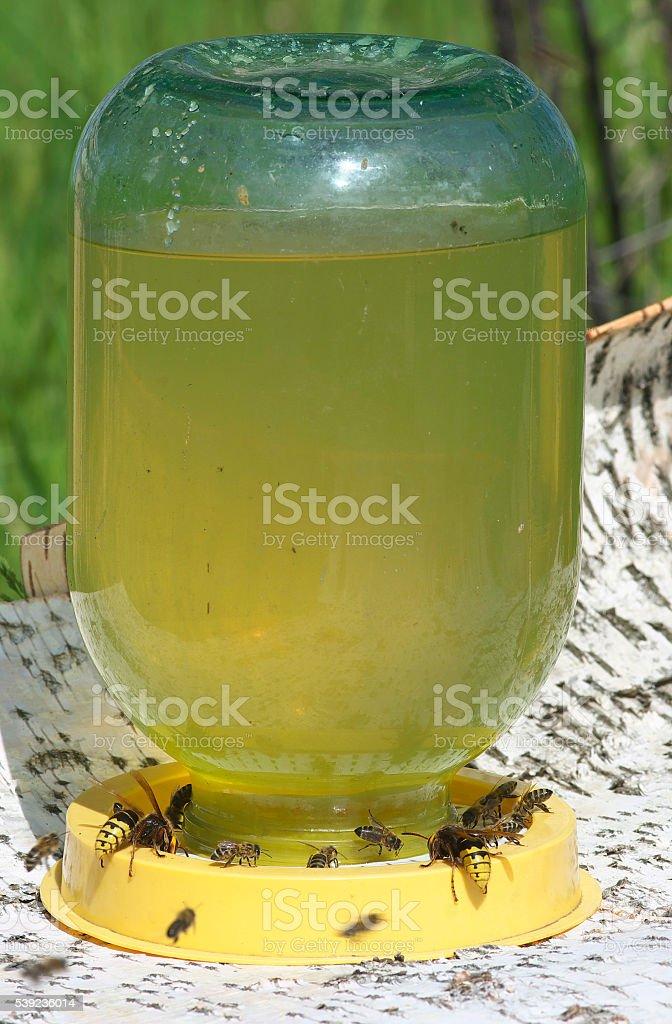 Las abejas en los bebedores. foto de stock libre de derechos