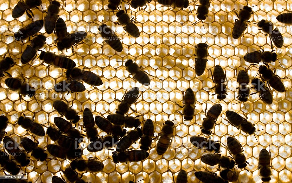 Bees on frame royalty-free stock photo