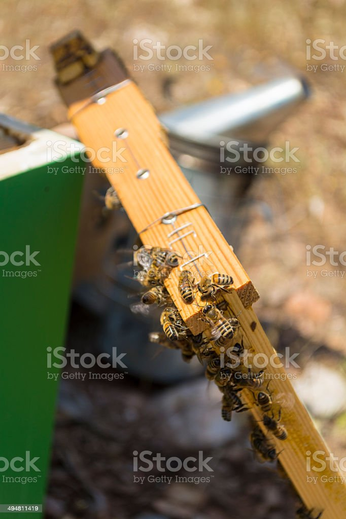 bees on frame stock photo