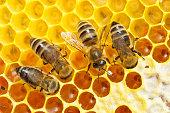 Nahaufnahme einer Biene auf einer Bienenwabe.