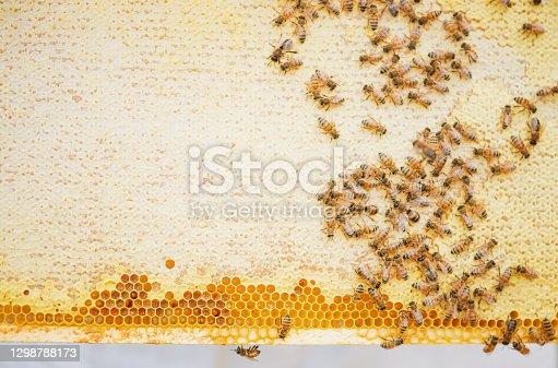 istock Bees on honeycomb 1298788173