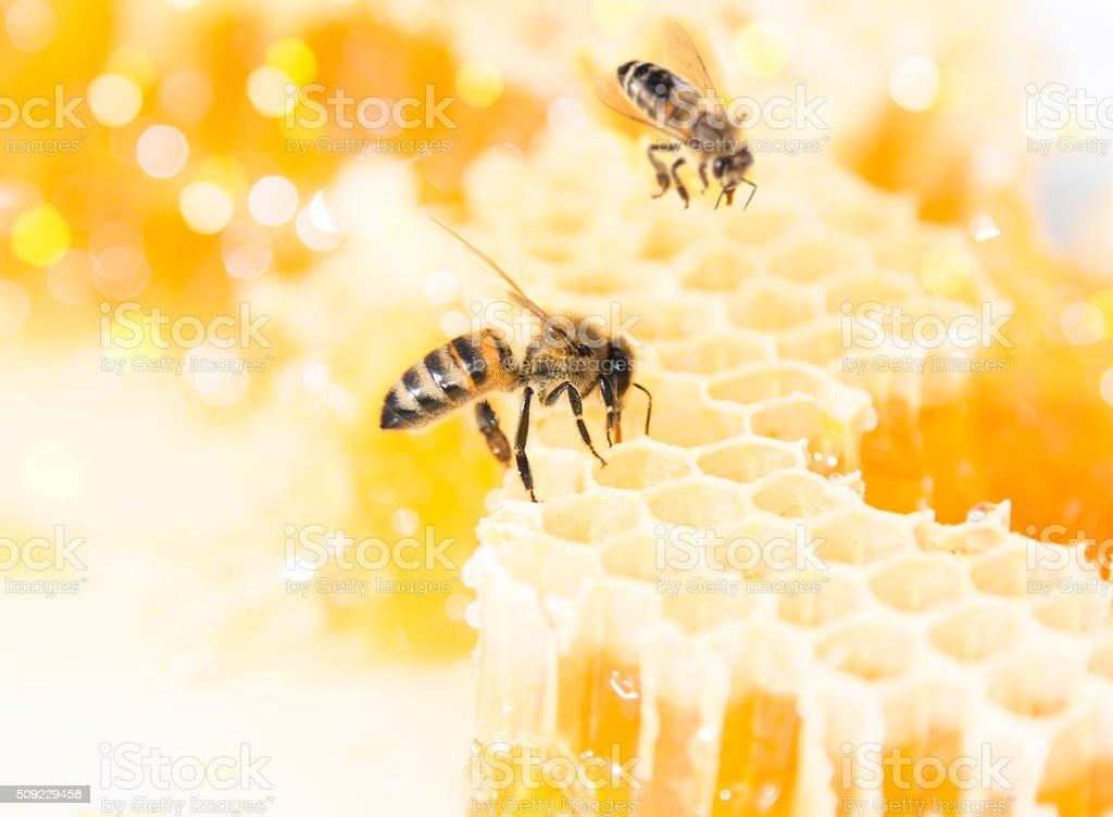 Bees on Honeycomb​​​ foto