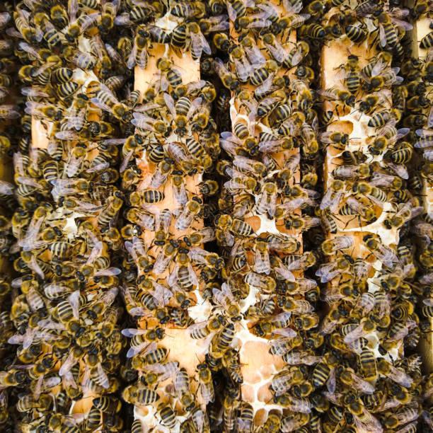 Bees – Foto
