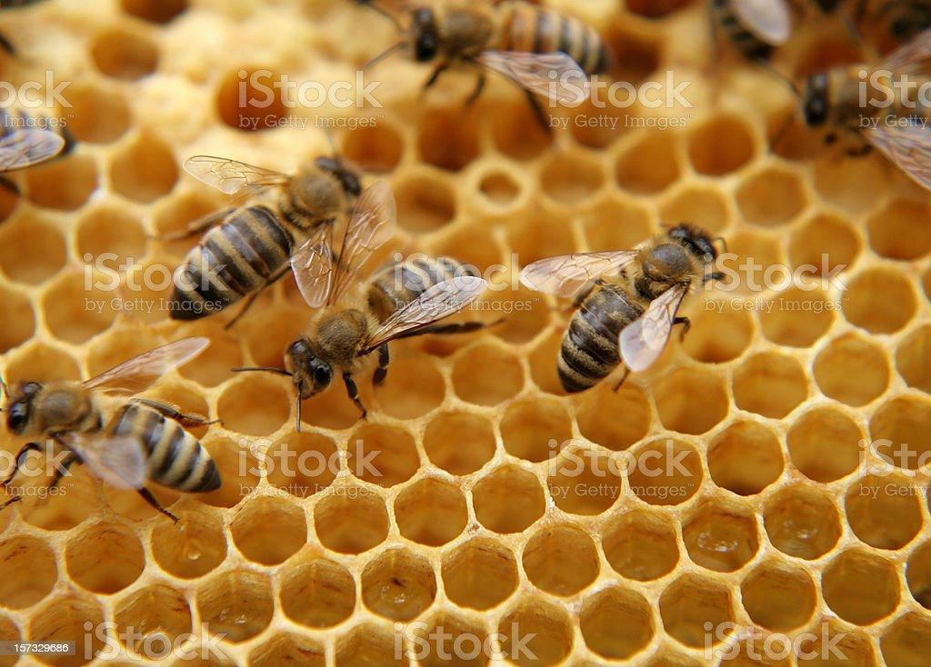 bees royalty-free stock photo