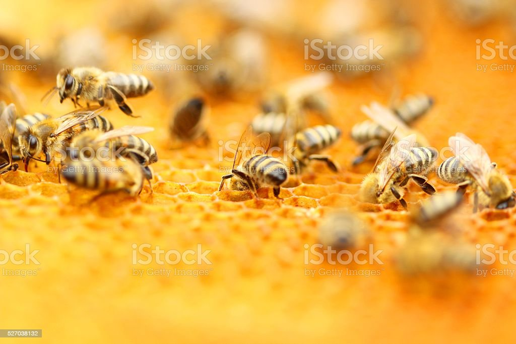 Abeilles - Photo