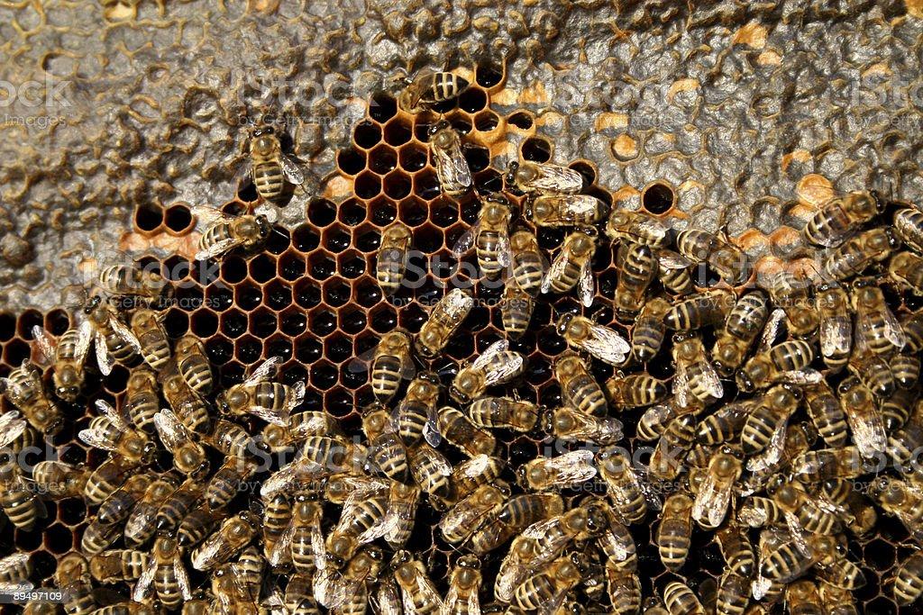 bees royaltyfri bildbanksbilder